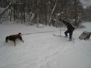 A better shot of John pulling the sled with a little help from sled dog veteran Isabel