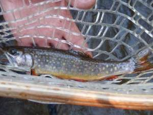 Maryland Trout fishing