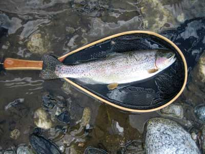 Ohiopyle Rainbow trout