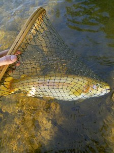 Trout on the Middle Yough