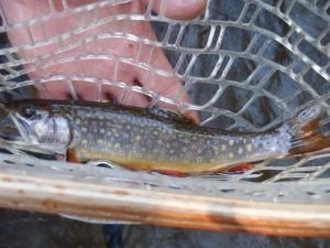 Yough fish Wilderness Voyageurs